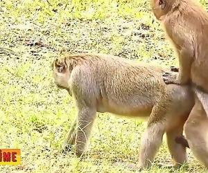 Fortunate lukesaving animals in africa 6 min